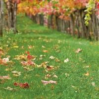 aspirateur-souffleur-broyeur-jardin
