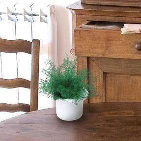 un anti insectes 100 biologique outillage bricolage jardinage et accessoires maison. Black Bedroom Furniture Sets. Home Design Ideas