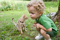 Loigner les chats du jardin outillage bricolage jardinage et accessoires maison tout pour - Repulsif pour chats dans les jardins ...