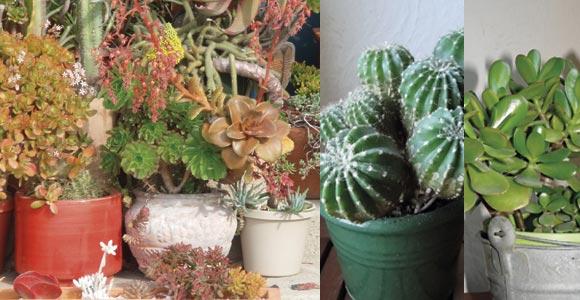 Prot ger ses plantes sur son balcon dans une mini serre for Plantes de balcon en hiver