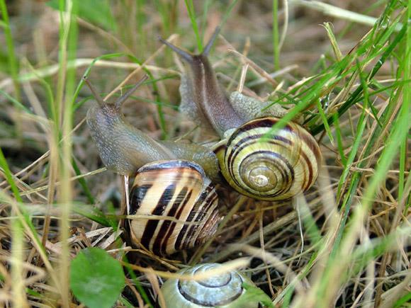 Comment lutter contre limaces et escargots