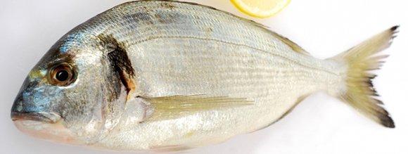 Découvrez 2 nouvelles recettes de poisson au four cyclonique.