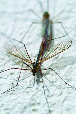 Les destructeurs d'insectes