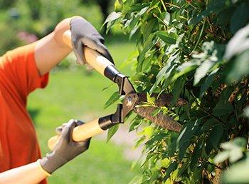Préparez votre jardin à l'arrivée du printemps