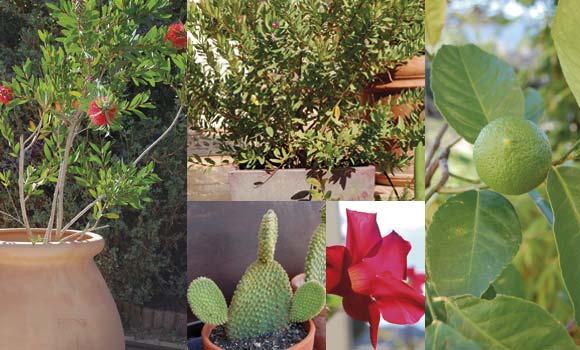 plantes à protéger du froid dans le serre d'hivernage